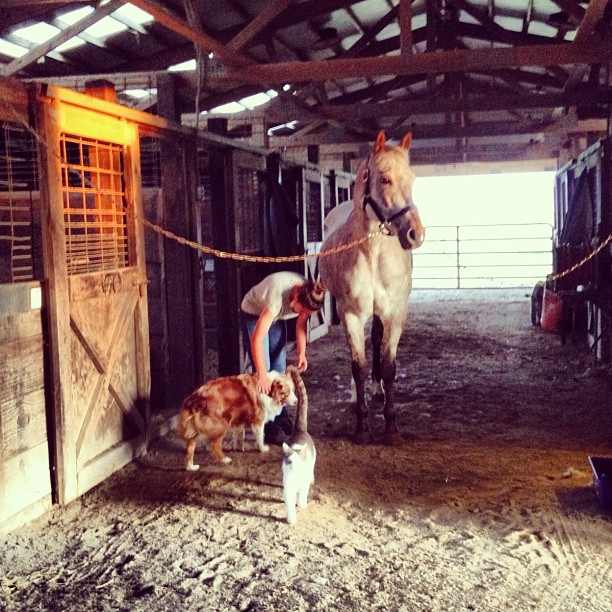 124/365+1 A Menagerie of Animals #horse #cat #dog #stable
