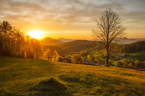 morning trees light sun nature sunrise view slovenia gora limbarska