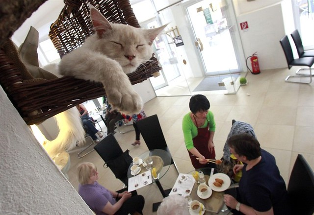 Cat Cafe Expands to Vienna