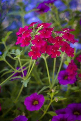 flowers-5963