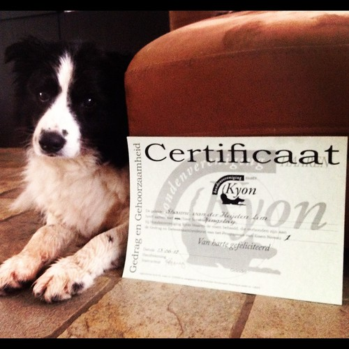 He got another certificate to his name