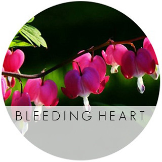 bleeding-heart-2-lp
