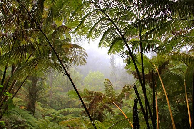 Selva tropical en el Parque Nacional de los Volcanes de Hawái