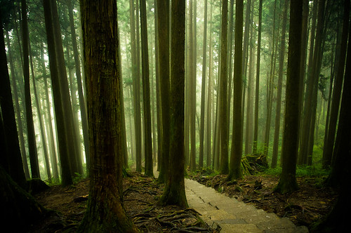 Forests of Alishan-7