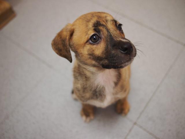 X Dog Kennels For Sale Craigslist Maine