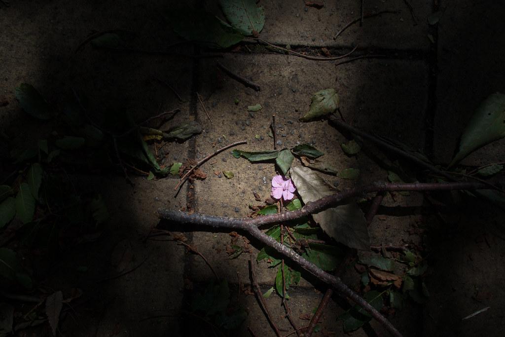 落ちた花と枝 2012/06/20 OMD00033