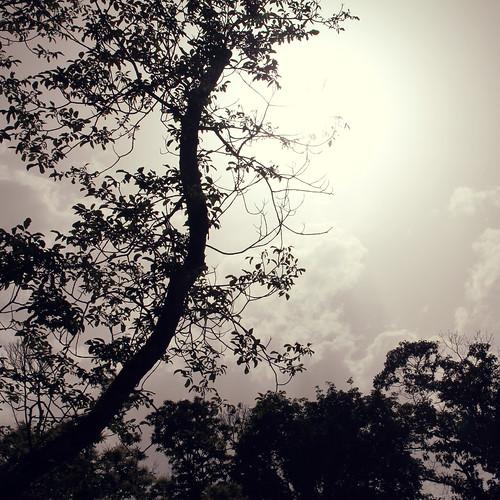 arbre solo2