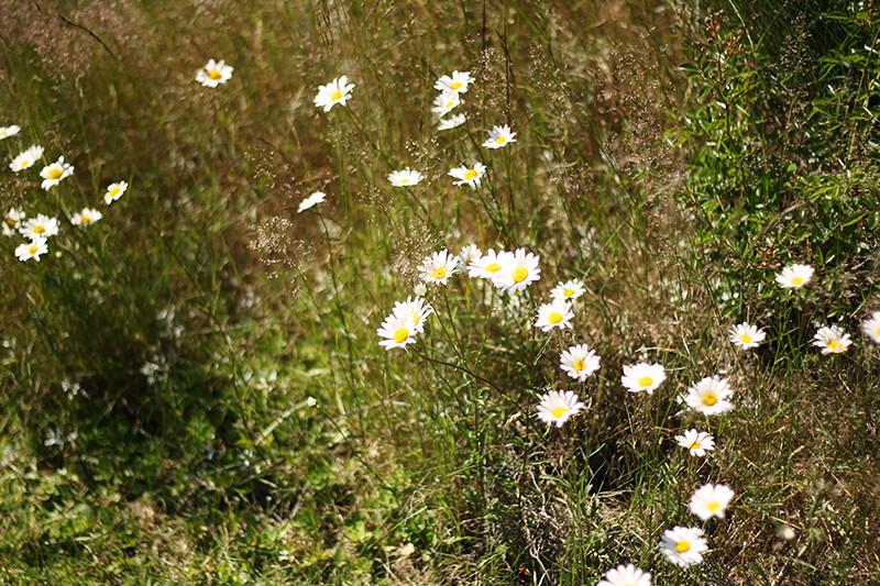 blommor utanför huset