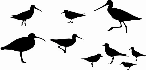 Shorebird Silhouettes