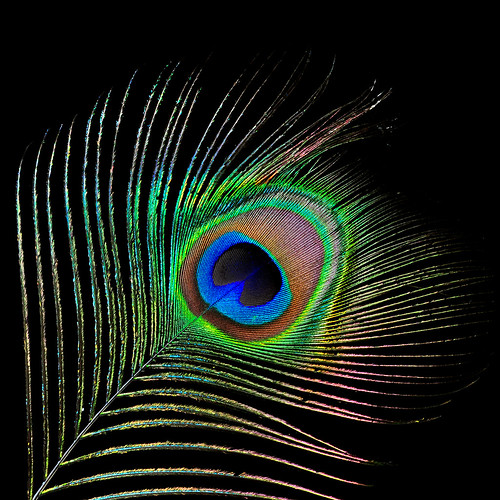 Iridescent Feather
