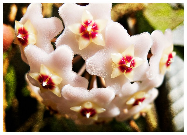 (199/366) Plant Torture
