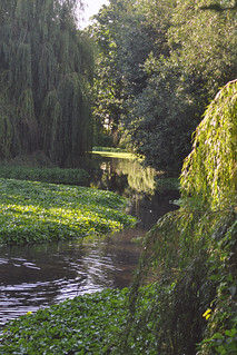Wandle in Ravensbury Park