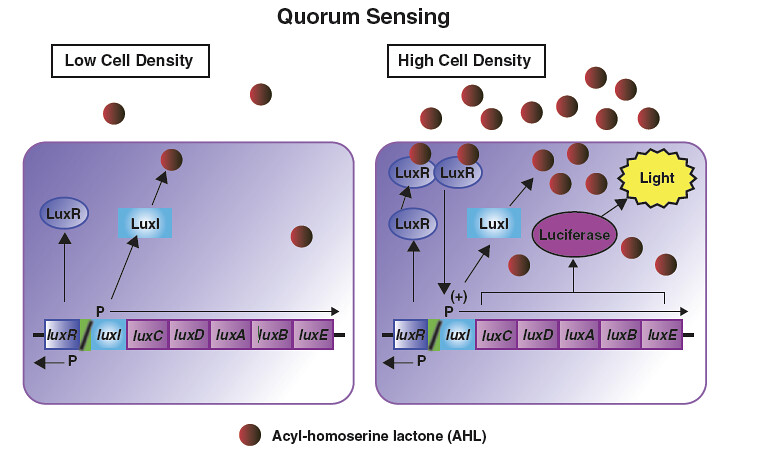 Illustrative diagram showing Quorum Sensing (QS) Molecules