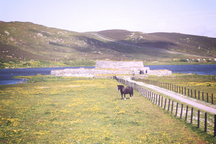 shetland horse and loch