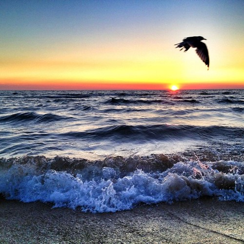 #eavig #iphonography #summer #sunset #sky #sun #beach #bird #gull #lakemichigan #kirkpark #michigan #mattslens #fun #flying #seagull #shore by MattsLens