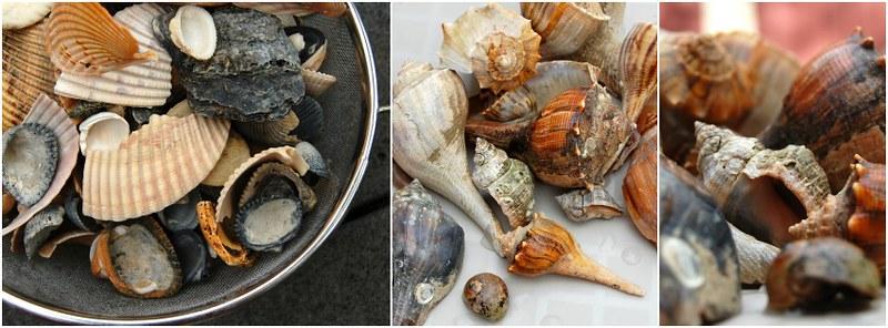 shells Collage