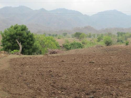 Kamjibhai Lalubhai's land.