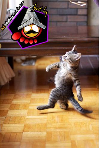 gambar kucing 02