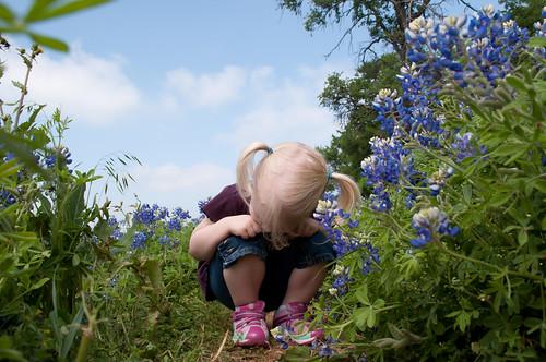 Bluebonnets2012-3.jpg