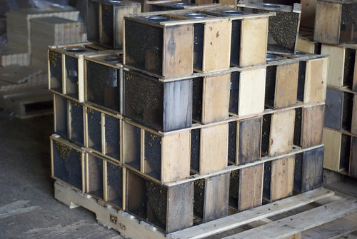 Pallet of bees