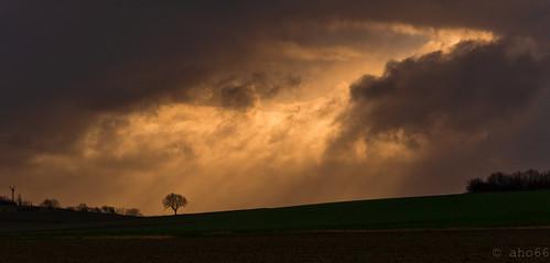 sunset tree germany deutschland wolken baum regen niedersachsen barsinghausen barrigsen