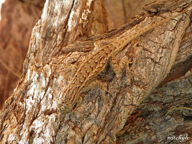 Spot The Lizard