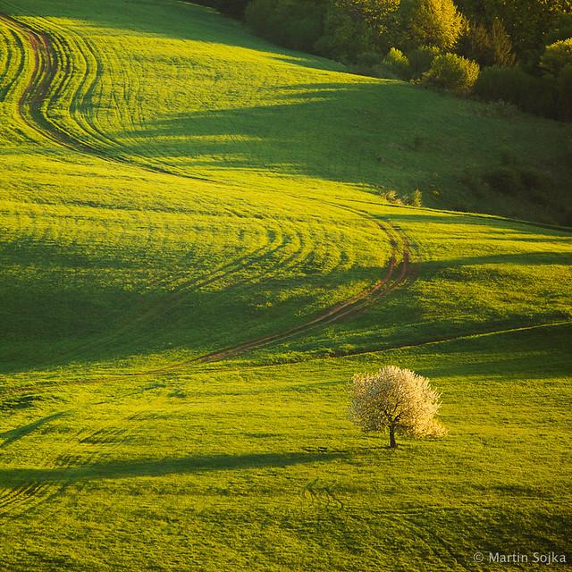 Spring Greens ~ Slovakia