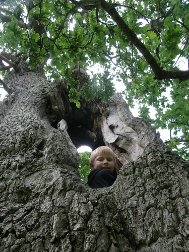 B in the hollow oak II