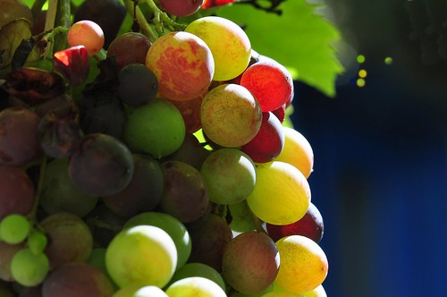 Colours of Grapes