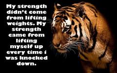 "My Strength by CDS Nutritionâ""¢"