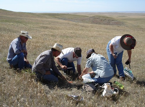 Leslie Stewart-Phelps, range management specialist and botanist, Oglala National Grassland