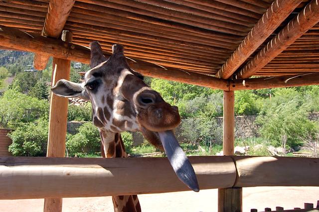 Cheyenne Mountain Zoo Flickr Photo Sharing