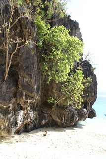 Wild Vegetation on the beach