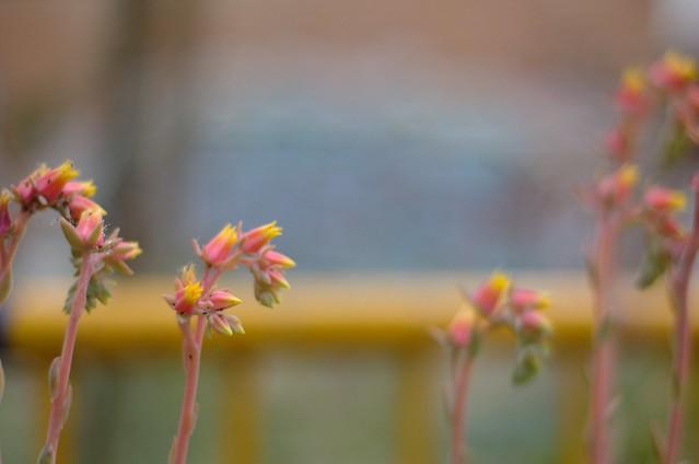 155/366: Plantas raras