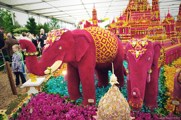 aliciasivert, alicia sivertsson, london, england, chelsea flower show 2011, flower, flowers, nature, blossom, bloom, elephant, garden, trädgård, trädgårdsmässa, blommor, blomster, växtlighet, natur, elefant