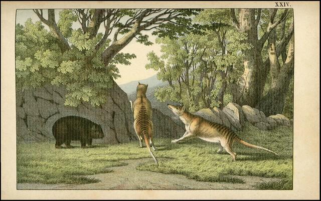 zoological chromolithograph - Le tigre-loup + Le woombat