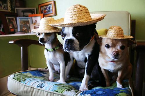 straw dogs by EllenJo
