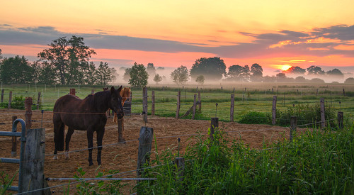 Good morning horse / Explore - Front Page