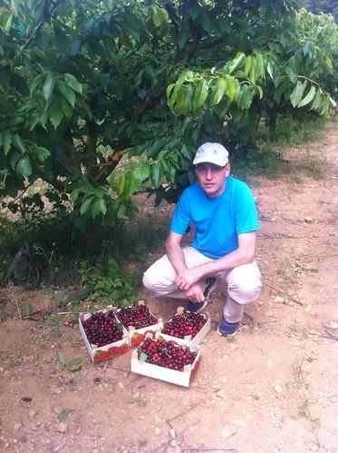 Begues | Apadrina Cirerers | Cerezas y recolector