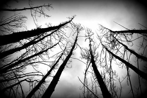 Árboles acechando