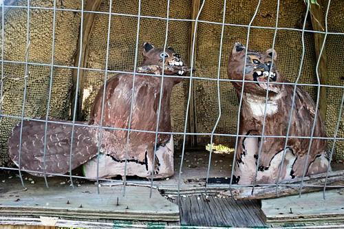 rabid-beavers