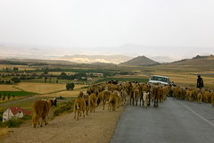 The road to Ain Leuh and a for-hire shepherd