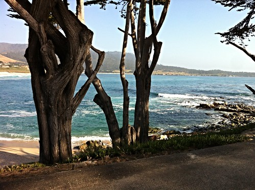 carmel califoria sea photo fort collins photographer photography live love dream out blue water tree vacation destination holiday seascape ocean