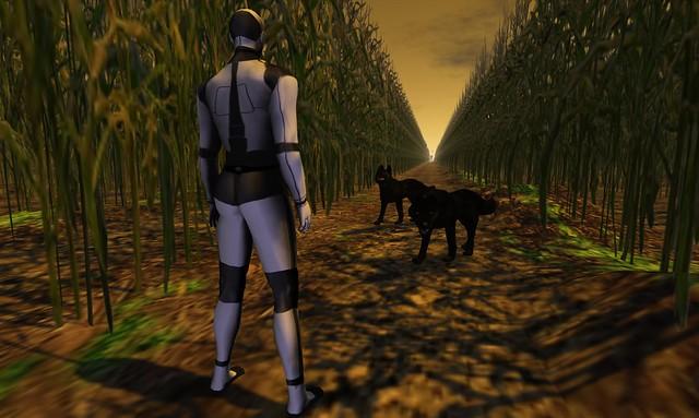 The Corn Field - 10
