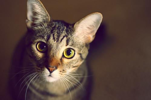 [フリー画像素材] 動物 1, 猫・ネコ ID:201207151000
