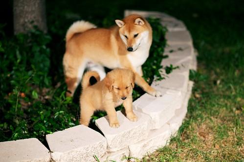 DogsDogsDogs 004