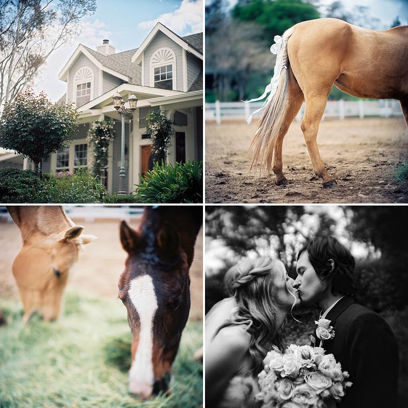 JJ horses