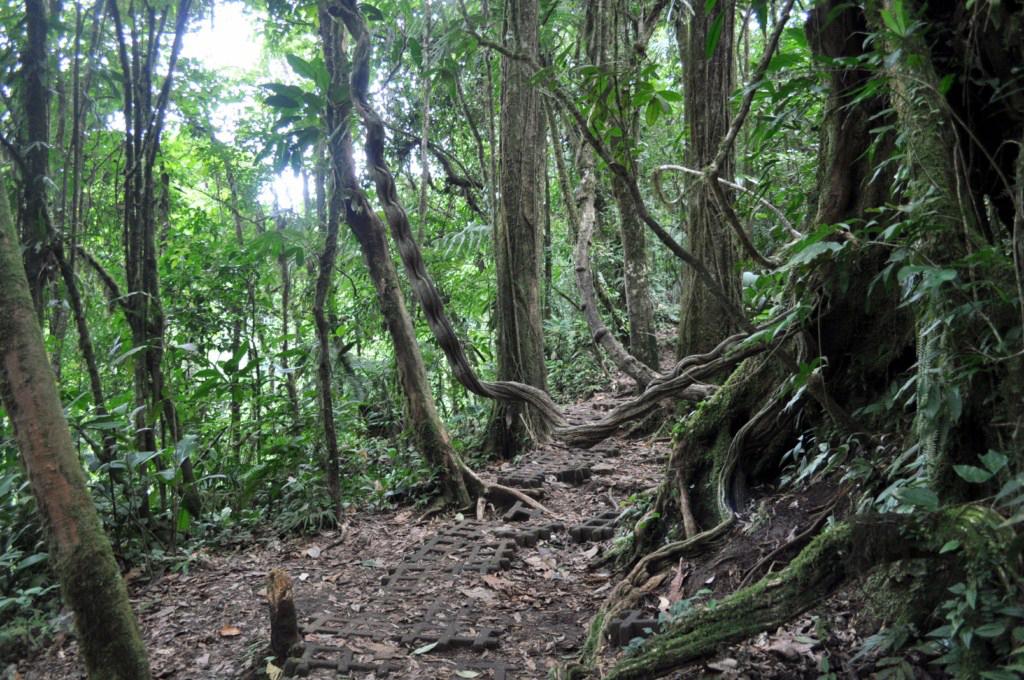 Bosque Selvático que cubre el entorno del Parque Nacional Volcán Tenorio río celeste, colorido capricho de la naturaleza - 7538384204 54616b6db5 o - Río Celeste, Colorido capricho de la Naturaleza