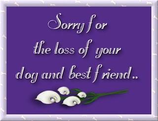 pet_sympathydog