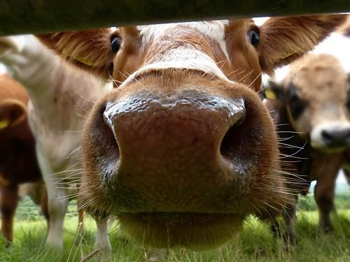 Aww-dorable Farm Animals